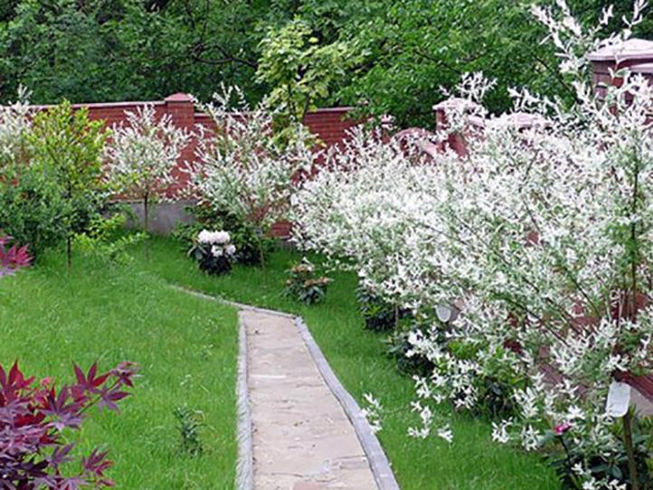 Плодовый сад со спиреями