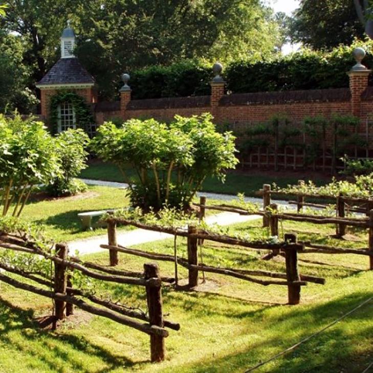 Специальные ограды для плодовых кустарников