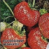 Земляника Московский Деликатес.jpg