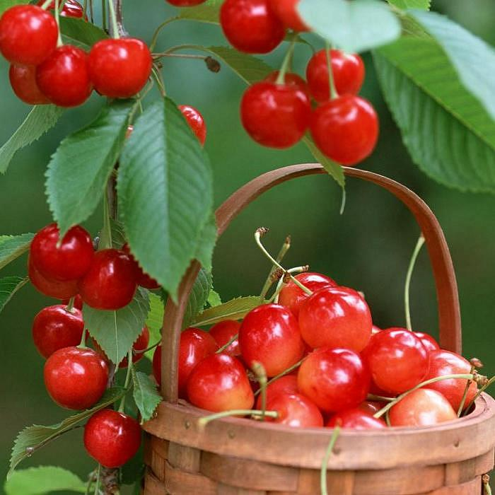 Питомник растений «Южный» – надежный поставщик здоровых растений